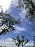 Blue sky with tree Royalty Free Stock Photo