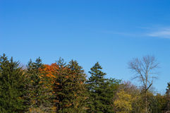 Blue Sky and Tree line Stock Photos
