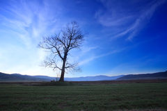 Blue sky and tree Stock Images