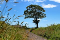 Blue sky and tree next to the road royalty free stock photos