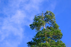 Blue sky. The tree represents the standing up for oneself Stock Photo