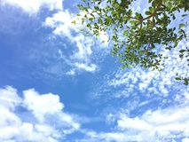 Blue sky and tree. In sunny day ,branching tree with blue sky as background Stock Photography