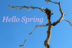 Blue sky and tree with text: Hello Spring stock image