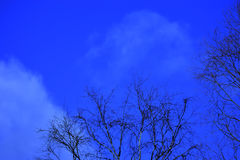 Blue sky with tree tops Stock Image