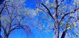 Blue Sky with Trees. This is a beautiful blue sky view with some trees just in view Stock Photo