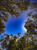 Blue sky with trees with branches and leaves in the shape of a circle, blue sky with some clouds, image with the view from the bot. Tom uparound, sunday Royalty Free Stock Photo
