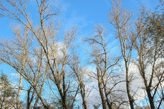 BLUE SKY WITH TREES Stock Images