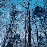 Blue sky. Trees forest park royalty free stock image