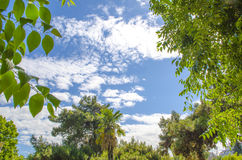 Blue sky and trees frame. Background Stock Photos