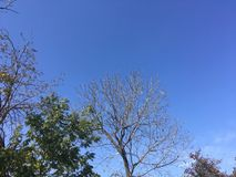 Sky, trees. Blue sky and trees. Nature Stock Photography