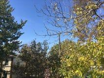 Trees, sky, siding house. Blue sky, trees and siding house. Nature Royalty Free Stock Photography