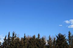 Blue sky and trees. royalty free stock photo