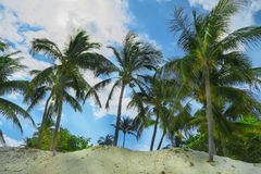 Exotic palms at sandy beach. Blue sky and turquoise Atlantic Ocean washing the coast of Cuba, branches of palm trees swing in the gentle breeze , lovely sunny Royalty Free Stock Images