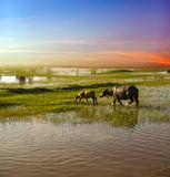 The blue sky wetlands background image. Blue sky and the green grass, colorful Stock Photo