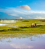 The blue sky wetlands background image. Blue sky and the green grass, colorful Royalty Free Stock Photography