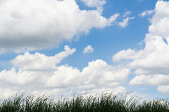 Blue sky. With white cloud Royalty Free Stock Photo