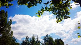 Blue Sky, White Cloud and Green Tree. Beautiful Nature Backgroun. Sky summer tree landscape nature forest Stock Photo