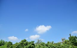 Blue sky with white clouds above green tree. Blue sky with white clouds above green tree in the forest Stock Images