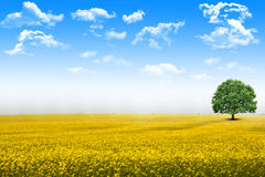 Blue sky with white clouds and green grass background on a summer day Stock Image