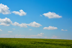 Blue sky with white clouds and green grass background on a summer day Royalty Free Stock Photography