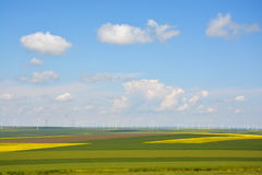 Blue sky with white clouds and green grass background on a summer day Stock Photography