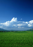 Blue sky white clouds on green grass Stock Images