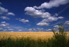 Blue sky with white clouds. Over a field Stock Image