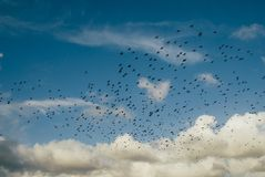 Blue Sky and White Clouds over Flock of Birds during Daytime Royalty Free Stock Photo