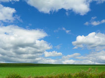 Blue sky, white clouds over green farm fields and cash crops. Horizontal image showing acres of farm agriculture fields of green, and vivid blue sky and puffy Stock Images