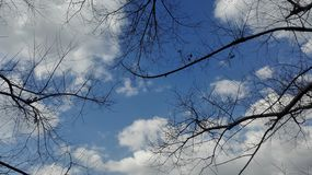 Blue sky at the daytime. Blue sky with white clouds and pattern of the black branches, sunlight at the daytime stock photo