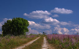 Blue sky with white clouds and road across the meadow. Blue sky with white fluffy clouds and road across the meadow Stock Image