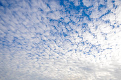 Blue sky with white clouds on sunset. Many little white clouds creating a tranquil weather pattern on the blue background. A clear cloudless day-time sky is blue Royalty Free Stock Photography