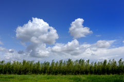 Blue sky, white clouds and trees Royalty Free Stock Photos