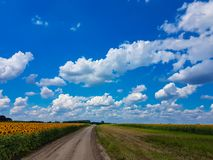Blue sky with white clouds vivid color cloudscape and  sunflower field landscape. Blue sky with white clouds vivid color cloudscape and yellow sunflower field Royalty Free Stock Photo