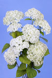 Blue sky and white flowers Royalty Free Stock Image