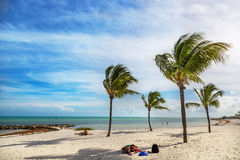 Blue sky with white sand and palm beach in Key West Royalty Free Stock Images