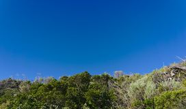 Blue sky and wild plants stock image