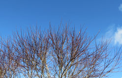 Blue Sky Through the Winter Branches. A shot of the blue sky through the winter branches of a tree on a perfect day for being in the garden Stock Photography