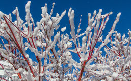 Blue Sky and Winter Snow Stock Image