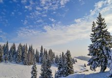Blue Sky and Winter Spruces in the Ural Mountains, Russia, Chelyabinsk region, Minyar. Pushkin`s fairy tal. Sunny winter day in the Ural Mountains, Russia Stock Photography