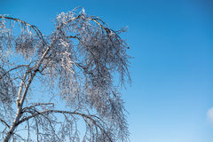 Blue Sky Wintertime Ice Tree. Beautiful ice covered tree and branches with vibrant bright blue sky in background. Sunny winter day Stock Image