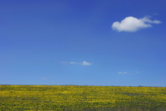 Blue sky and yellow field Stock Image