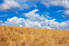 Blue sky, yellow field Royalty Free Stock Images