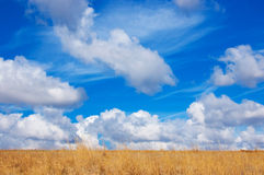 Blue sky, yellow field Stock Image