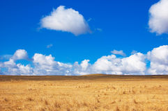 Blue sky, yellow field Royalty Free Stock Photos