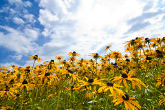 Blue sky and yellow flowers Stock Photography