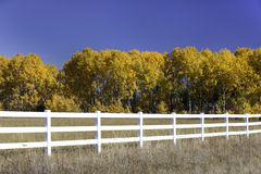 Blue sky, yellow trees, white fence. Stock Image