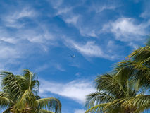 Blue skys, a plane and palms. A blue sky background with a plane flying and palm trees Royalty Free Stock Image