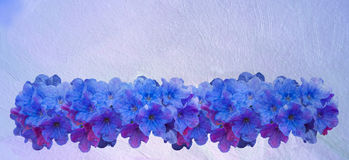 Blue small spring flowers. Many wildflowers. Oil texture Royalty Free Stock Photos