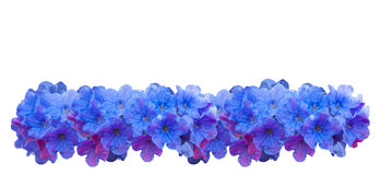 Blue small spring flowers. Many wildflowers Royalty Free Stock Photos